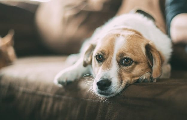 How to Help Pets Adjust to a New Home