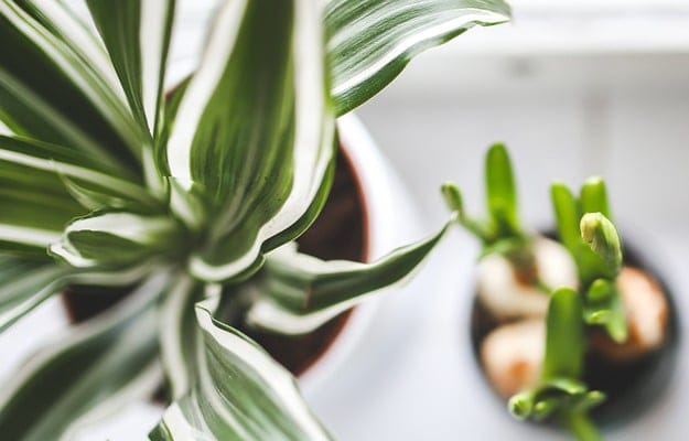 How to Safely Move Houseplants to a New Home