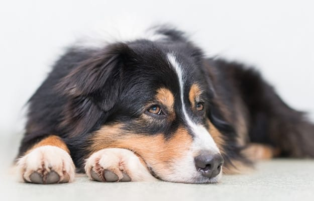 Tips on Renting a New Place When You Have Pets